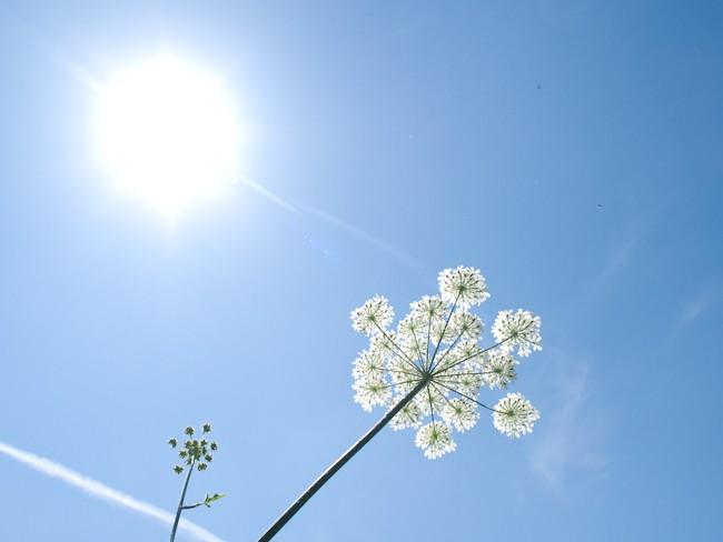 Image de nature composée d'un soleil iridescent blanc en haut à gauche de l'image sur un fond de ciel bleu qui prend toute la place. Au premier plan se trouvent, deux fleurs blanches, une épanouie en corole à droite, et une autre encore en bouton à gauche.