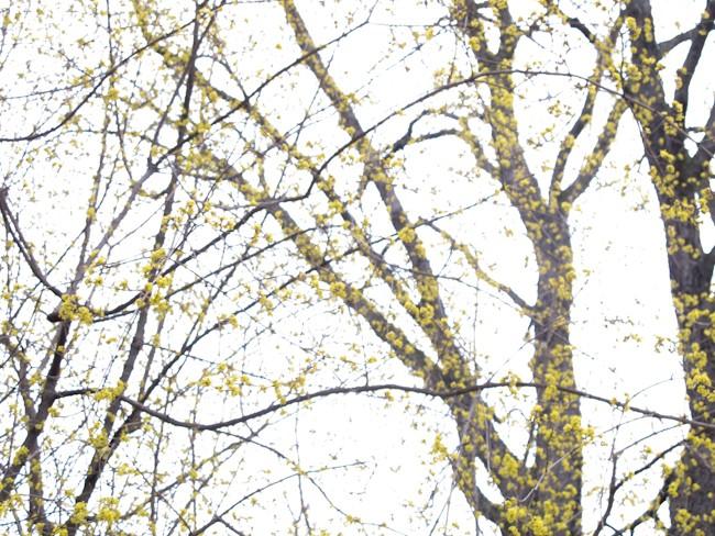Composition graphique d'arbres et fleurs jaunes.