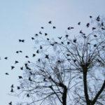 Envolée poétique d'oiseaux dans le ciel depuis un arbre.